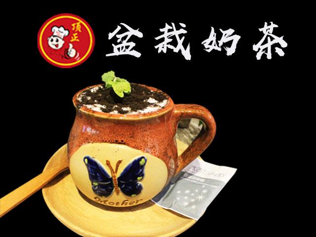 盆栽奶茶培训